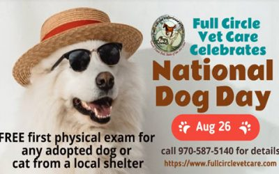 FREE First Physical Exam for National Dog Day!