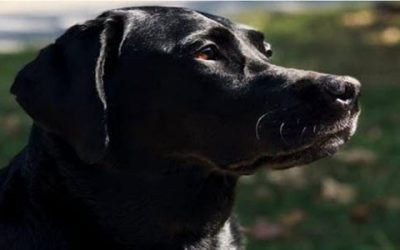 Is Black Dog Syndrome A Real Thing?