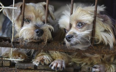 Puppy Mill Awareness Day – Can You Help?