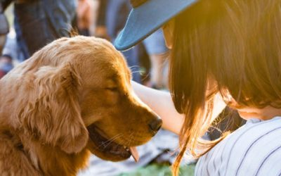 7 Steps to Celebrate September is Responsible Dog Ownership Month