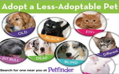 Adopt a Less Adoptable Pet 4 Love