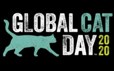 Global Cat Day – An Adopt a Pet Perspective