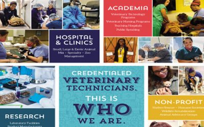 Here's to Celebrating National Vet Tech Week 2020!