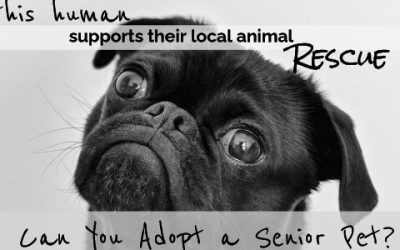 National Animal Shelter & Rescue Appreciation Week