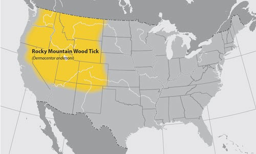 rocky mountain wood tick found in the usa area