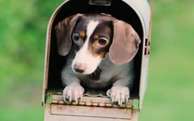 July 20th is National Get Out of the Dog House Day